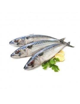 FROZEN TITUS FISH  1KG
