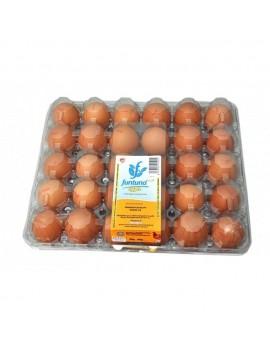 Funtuna Egg (Pack of 30)