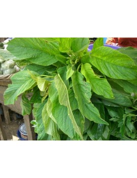 AFRICAN SPINACH (EFO TE TE)